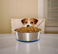 Dog with Food Allergies