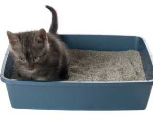 Kitten in Litterbox
