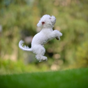 LeapingPuppy