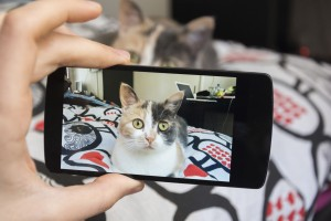 Picture of cat by smartphone