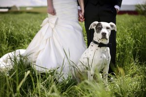 Spotted dog attends a wedding as best man