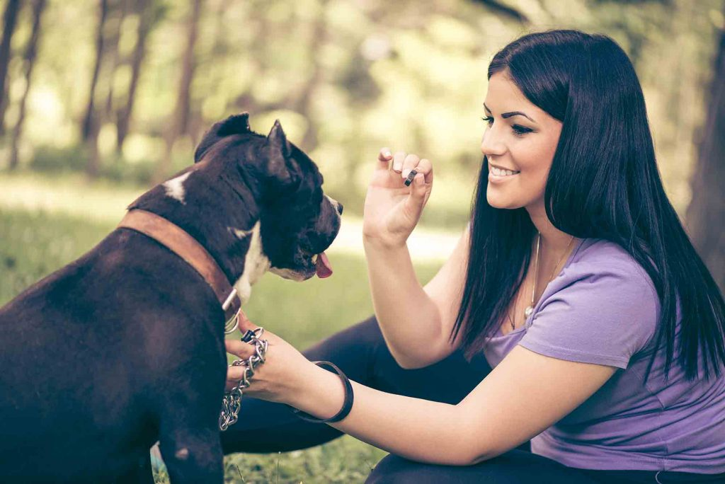 Homemade Pill Pockets for Your Furry Friend