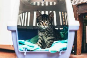 Disaster preparedness for your pet should be part of your family's disaster plan.
