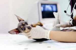 Pet insurance can defray the cost of veterinary care.
