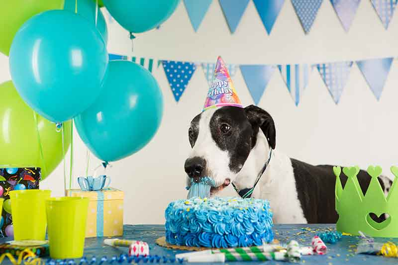 A pet birthday part is fun for pets and people
