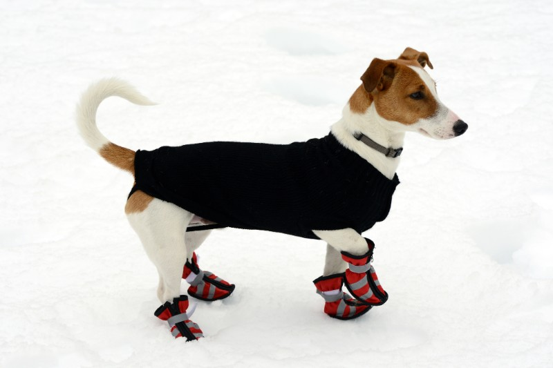 Keeping pets warm in winter is part of responsible pet ownership